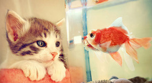 Learn How To Keep A Fish Alive!