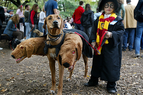 Last Minute Harry Potter Costume Ideas Every College Girl