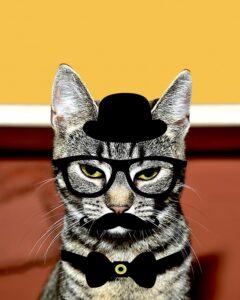 cat-1474092_960_720